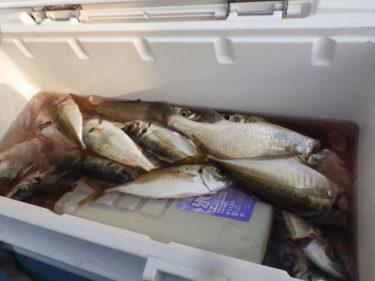 【初心者必読】激変!釣った魚を美味しく持ち帰る方法