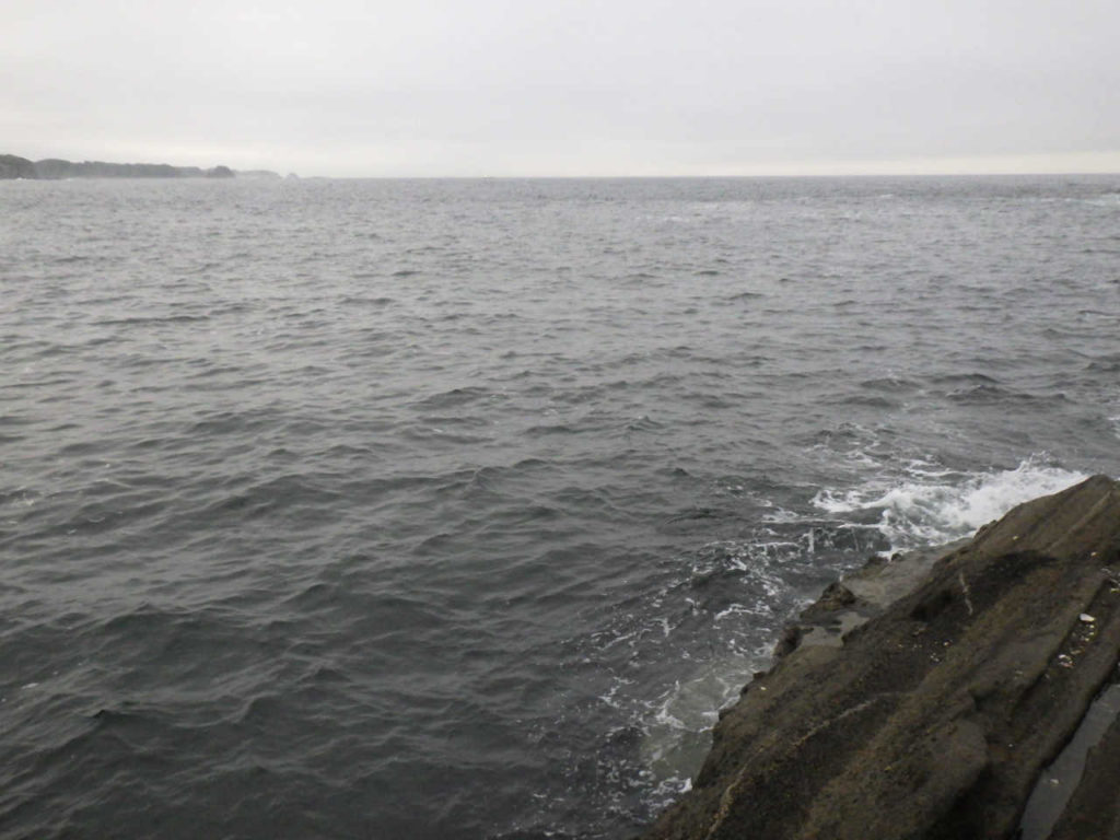 三浦半島の磯