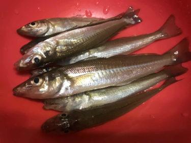 横浜で癒しのちょい投げキス釣りは場所取りが肝/横浜北部