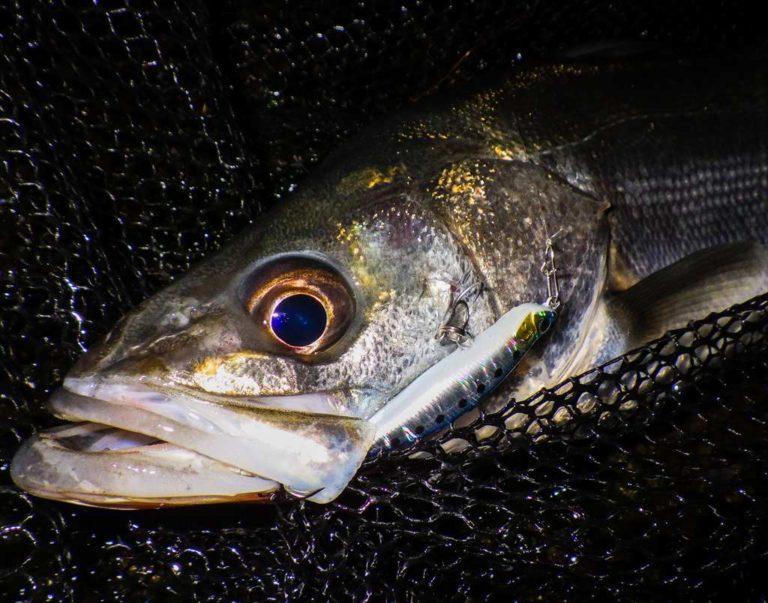 釣ブログACTION1周年