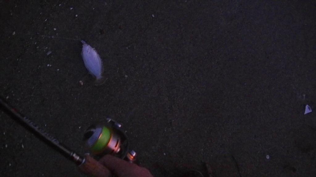三浦半島のサーフ朝マズメにご極小ヒラメHIT!
