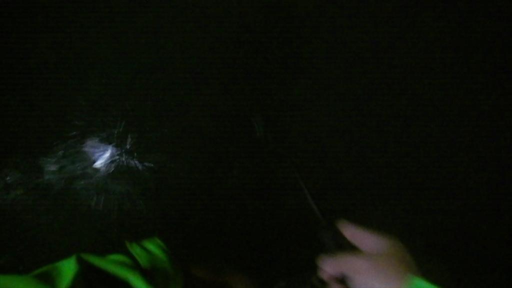 東京湾ボートアジングでヒラスズキと黒鯛!/横浜根岸湾