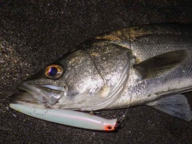 冬のシーバス釣りは夜磯からの砂浜サーフで意外な場所でエラ洗い!/三浦半島東部≪前編≫