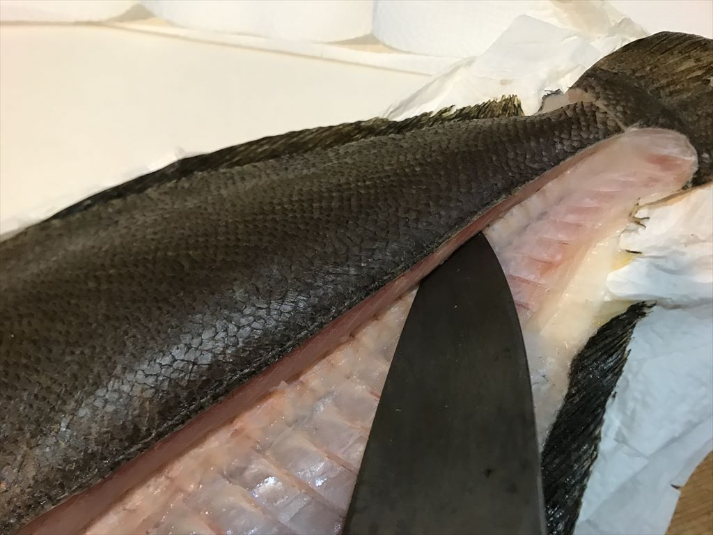 三浦半島の座布団サーフヒラメのお寿司