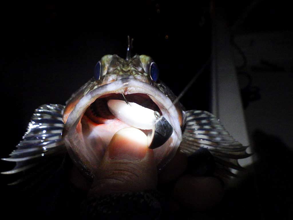 カサゴのルアー釣りで根掛かりしにくいジグヘッド!