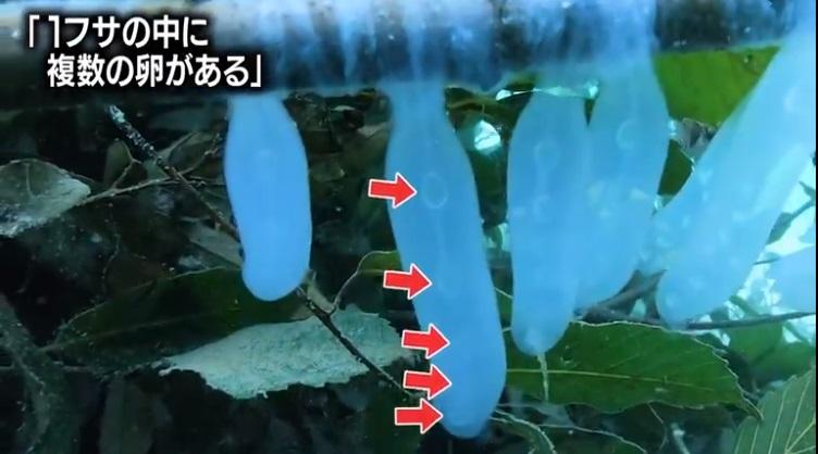アオリイカ釣り好調!城ヶ島の人工産卵床の効果か!?