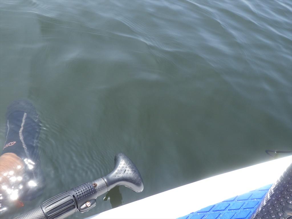 海の公園サップで釣り!ハゼを喰らう正体とは?